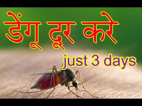 Dengue Fever Symptoms And Treatment In Hindi And Urdu|Dengue Ka Gharelu Ilaj  In Hindi And Urdu