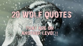 20 Wolf Quotes that are on another level!!