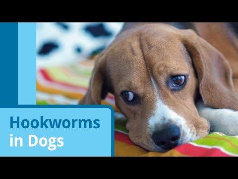 Hookworms in Dogs