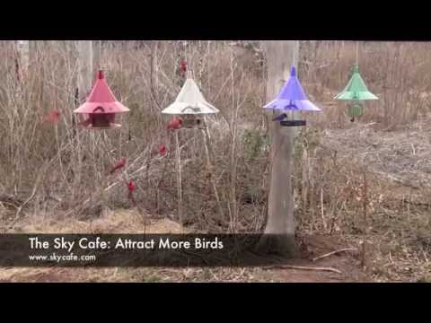 Backyard Feeding Frenzy - How to Attract More Birds