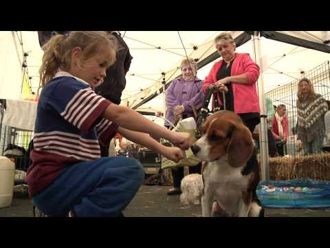 North Geelong Veterinary Clinic - Online Video Production   Melbourne   Geelong