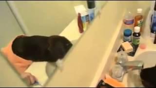 funny amezing dog