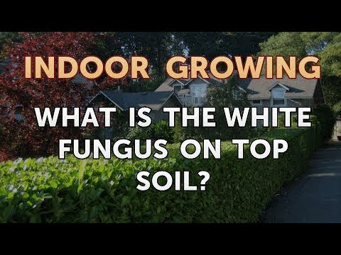 What Is the White Fungus on Top Soil?