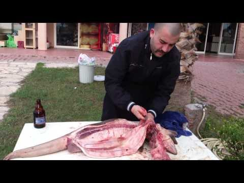 How to gut and clean a shark Part -1