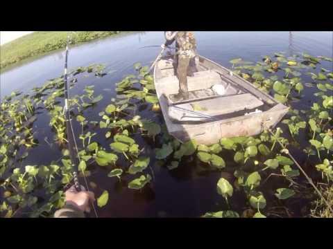 Big Alligator Hunt South Florida