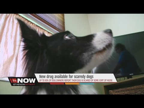 New drug for dog anxiety
