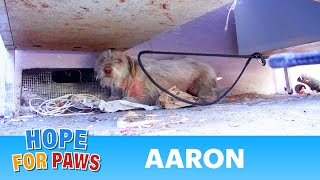 Hope For Paws: Homeless sick dog living under cars for 7 months - finally saved!  Please share.