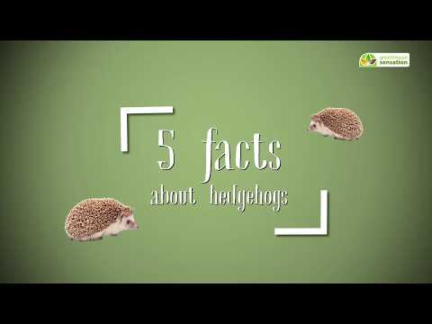 Top 5 Hedgehog Facts