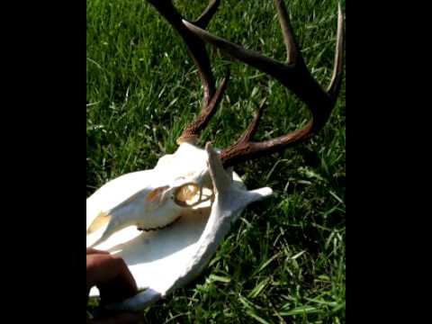 Chep DIY Deer Mount
