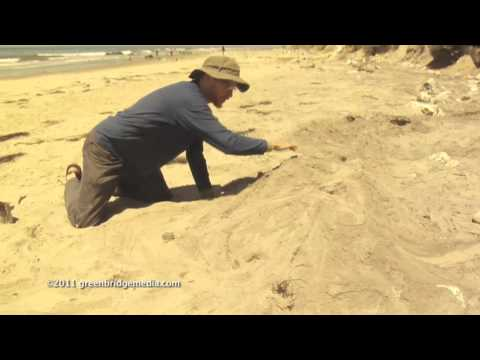 Brad Lancaster Watershed Demonstration on the Beach
