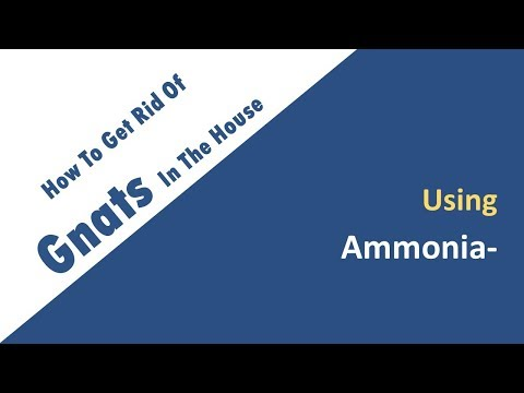 how to get rid of gnats in the house with Ammonia