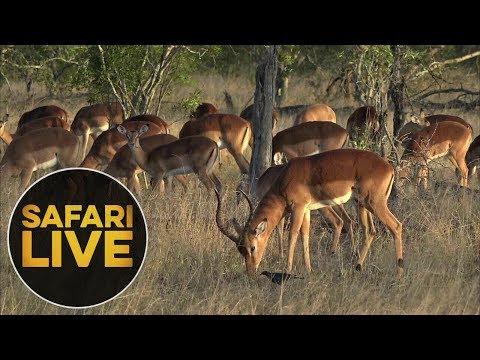 safariLIVE - Sunrise Safari - June, 04. 2018