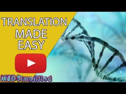 DNA Translation Made Easy