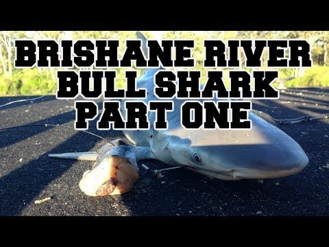 BRISBANE RIVER BULL SHARK (PART ONE)
