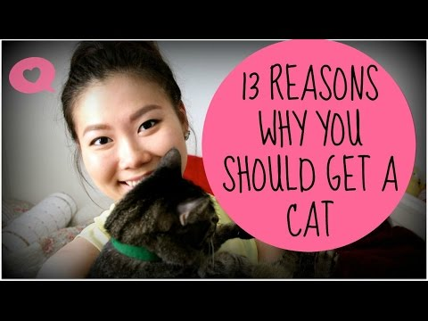 13 Reasons Why You Should Get a CAT