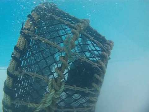 Steel Frame Lobster Pot