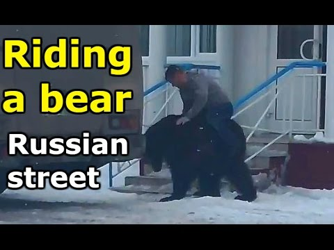 Riding a bear in Russia