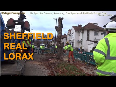 The Real Life LORAX and Once-ler's of Sheffield Street Trees Fellings Rampage Protests
