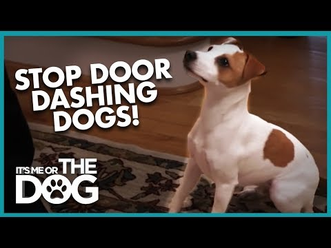 How To Stop Dogs From Door Dashing