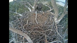 Big Bear Eagle Cam ~ Stormy