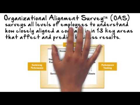 Organization Alignment Survey Whiteboard