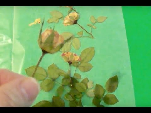 How to Press Flowers - Small Roses