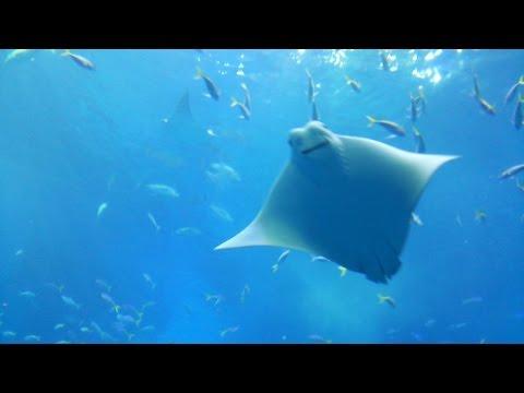 美ら海水族館 Okinawa Churaumi Aquarium