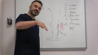 Baker Kisti (Popliteal Kist) nedir, tedavi yöntemleri nelerdir   Prof. Dr.  Ahmet Akgül