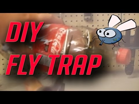 How To Make A Cheap Homemade Fly Trap With A Two Liter