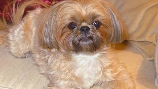 Woman Outraged After DNA Test Reveals $1,750 Dog Isn