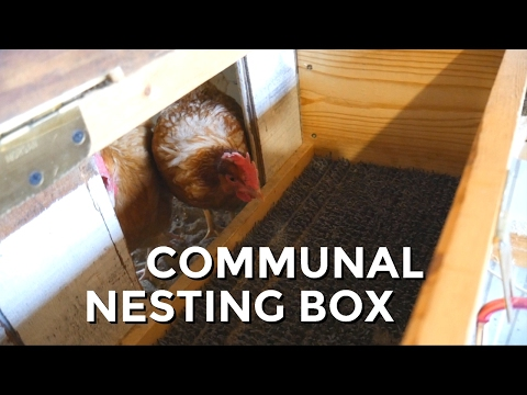 A BETTER NESTING BOX - Communal Box for Chickens