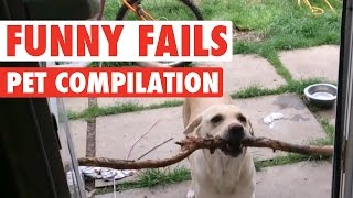 Funny Dogs And Cats || Silly Pet Fails Compilation