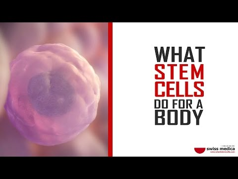 What stem cells do for a body