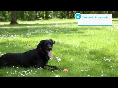 Banfield Pet Hospital – Tips for Exercising Your Dog or Cat In the Summer Heat