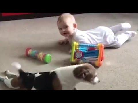 Watch Family Dog Teach Baby Bestie to Crawl