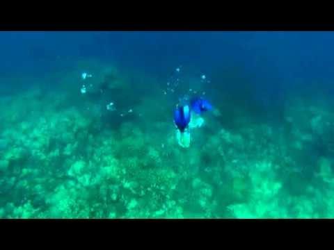 Flower Island Palawan, Philipines: Freediving