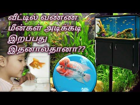 Infection control of aquarium fishes tamil | disease protection from argulus tamil |aquarium