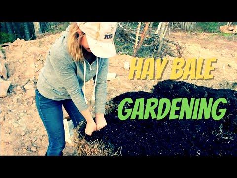 Straw Bale | Hay Bale Gardening by Dummies