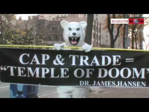 Polar Bear Stops Traffic In Seattle