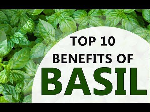 Top 10 Benefits of Basil - Amazing Health Benefits of Basil - Basil Health Benefits and Uses