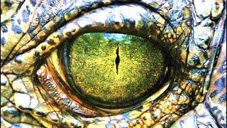 MonsterQuest - The Last Dinosaur  pt1 - PakVim net HD Vdieos