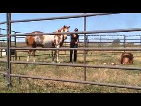 Equine Head Shaking Syndrome