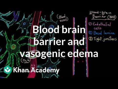 Blood brain barrier and vasogenic edema   Circulatory System and Disease   NCLEX-RN   Khan Academy
