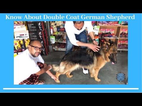 Dog Breed - Know About Double Coat German Shepherd - Bhola Shola