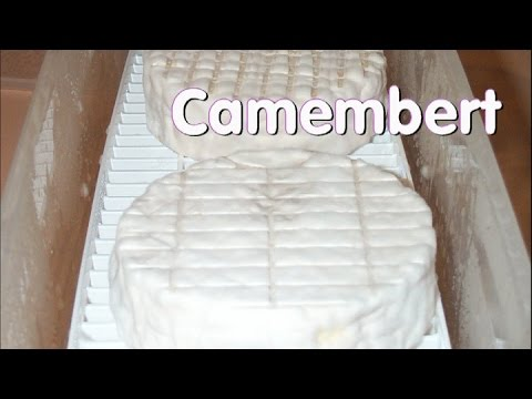 Making Camembert at Home