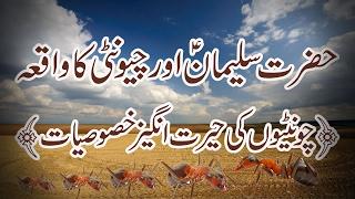 Hazrat Suleman A.S or Chunti ka waqia/History in urdu/hindi. Historical documentary of Sukeman A.S