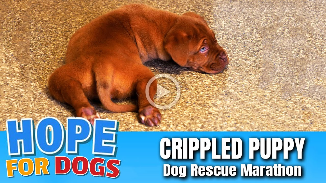 Hope Rescues Crippled Puppy From Kentucky