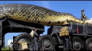 दुनिया का सबसे बड़ा सांप मिला ब्राजील में |World's Largest Snake found in Brazil | BIGGEST SNAKE