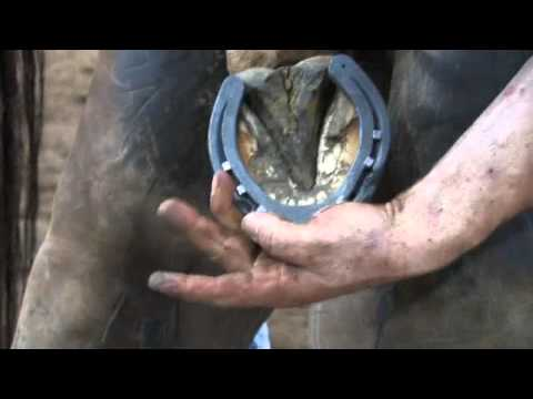 World Championship Blacksmiths' Competition Top Five Shoeing