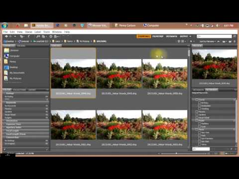 Part 1 - Organizing Your Photos Using Adobe Bridge